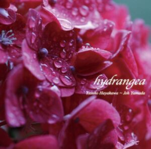 CD hydrangea イメージ画像